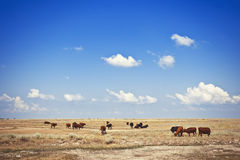 Cows in meadow Stock Photos