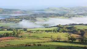 Cows in misty valley in The Western Brecon Beacons National Park stock video footage