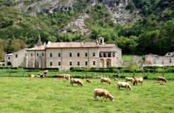 Cows near the Monastery of St. Mary, Spain Stock Photo