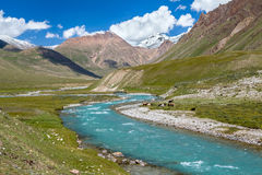 Cows pasturing near turquoise river, Tien Shan Stock Photo