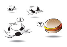 Cows Running Away From Lonely Hamburger. Fresian cows running away from a lonely hamburger Stock Photography