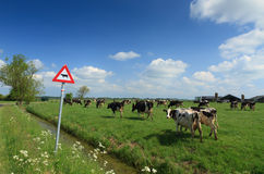 Cows & sign Royalty Free Stock Images