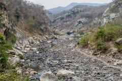 Cows in Somoto canyon, Nicarag. Ua stock photos