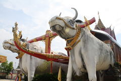 Cows Statue in Thailand temple. Stock Photo