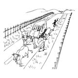 The cows that stoped the car. Illustration of a van blocked on a street because of a cows crowd, black and white version. Useful also for educational or coloring Royalty Free Stock Photography