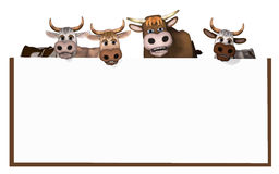Cows und bull Royalty Free Stock Photo