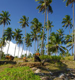 Cows under the palms Stock Images