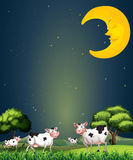 Cows under the sleeping moon. Illustration of the cows under the sleeping moon Royalty Free Stock Image