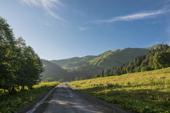 Cows walking along the road in the mountains. Blue sky. Sunset Stock Photography