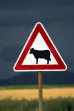 Cows warning Stock Photography