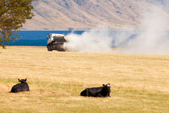Cows watch truck apply fertilizer on pasture field stock photos
