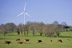 Cows and wind turbine in the meadow Stock Photos