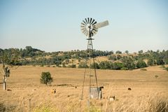Cows and a windmill in the countryside. Royalty Free Stock Photo
