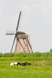 Cows and windmill Royalty Free Stock Photo