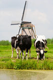 Cows and windmill Stock Photos