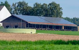 Cowshed with solar cells on the roof. Modern cowshed with photovoltaic installation on the roof royalty free stock images