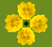 Cowslip Blooms Stock Image
