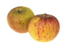 Cox Apples Royalty Free Stock Photography