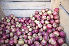 Coxes apple in wooden box on market for sale. The Coxes apple in wooden box on market for sale Stock Photos