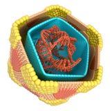 Coxsackie virus internal structure stock photo
