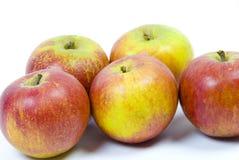 Coxsche Pippinapfeläpfel auf weißem Hintergrund Lizenzfreie Stockbilder