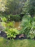 Coy pond stock photos