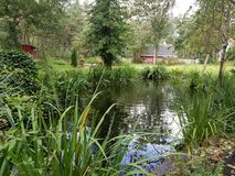 Coy pond. Backyard paradise water views stock images