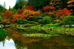 Japanese Garden in Seattle`s Washington Park Arboretum Royalty Free Stock Image