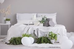 Coy space on the empty grey wall of sophisticated bedroom interior with urban jungle and comfy king size bed. Copy space on the empty grey wall of sophisticated royalty free stock image