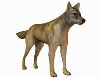 Coyote attentif illustration de vecteur