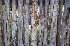 Coyote of het slechte stok schermen rond een tuin - close-up van ruwe boomstokken gebruikt zoals inperkend het Zuidwesten van de  stock fotografie