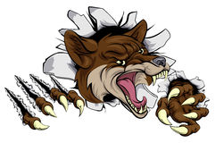 Coyote mascot ripping out Royalty Free Stock Images