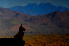 Coyote Silhouette 1. Silhouette of a desert coyote in the desert mountains Royalty Free Stock Image
