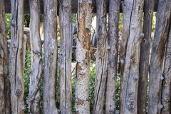 Coyote or wicked stick fencing around a garden - close-up of rough tree sticks used as fencing in USA Southwest landscaping stock photography