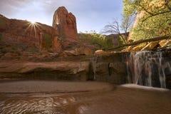 Coyoteravijn die in Escalante Utah de V.S. wandelen royalty-vrije stock afbeelding