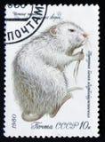 Coypu of nutria - Myocastor-coypus, reeks waardevolle species van bont-dragende dieren, circa 1980 Stock Foto's
