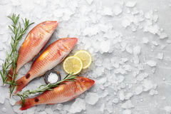 Cozimento dos peixes do salmonete vermelho Fotografia de Stock