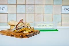 A cozinha desossa o recipiente para cães Foto de Stock Royalty Free