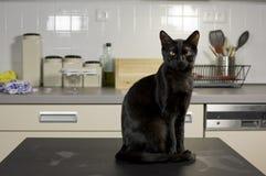 Cozinha home do gato Fotos de Stock