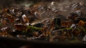 Cozinhando e agitando mexilhões na frigideira grande filme
