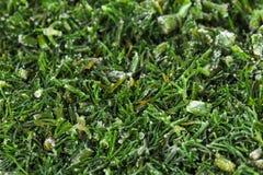 Cozinhando o verde fresco do alimento culinary foto de stock royalty free