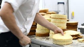 Cozinheiro chefe de pastelaria que corta o bolo de esponja em camadas Processo de produção do bolo vídeos de arquivo