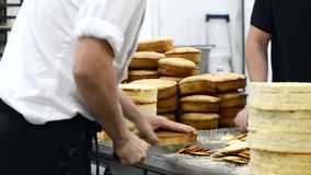 Cozinheiro chefe de pastelaria que corta o bolo de esponja em camadas Processo de produção do bolo filme