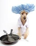 Cozinheiro chefe Dog com bandeja fotos de stock