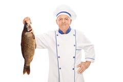 Cozinheiro chefe masculino maduro que guarda um peixe cru Fotografia de Stock Royalty Free