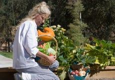 Cozinheiro chefe que colhe vegetais Foto de Stock Royalty Free