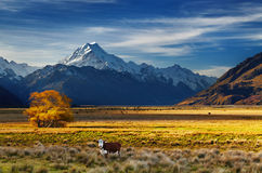 Cozinheiro da montagem, Canterbury, Nova Zelândia Fotografia de Stock Royalty Free