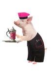 Cozinheiro Pig Fotografia de Stock Royalty Free