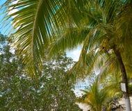 Cozumel island beach in Riviera Maya. Of Mayan Mexico Stock Photo