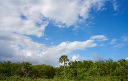 Cozumel island San Martin beach palm trees. Riviera Maya of Mexico Stock Image